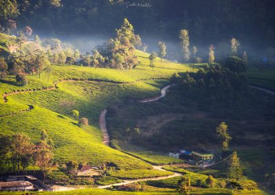 munnar photography workshop