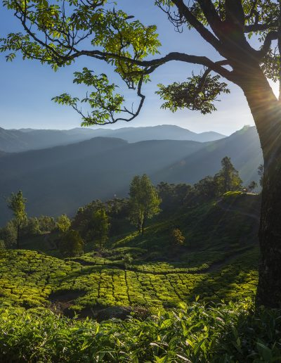 munnar-place_01_rays02_full